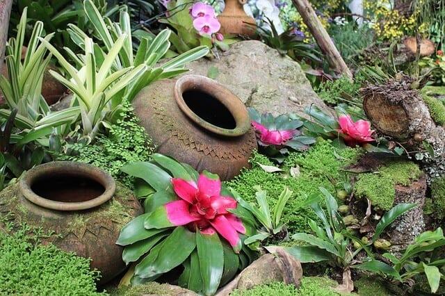 כד לגינה