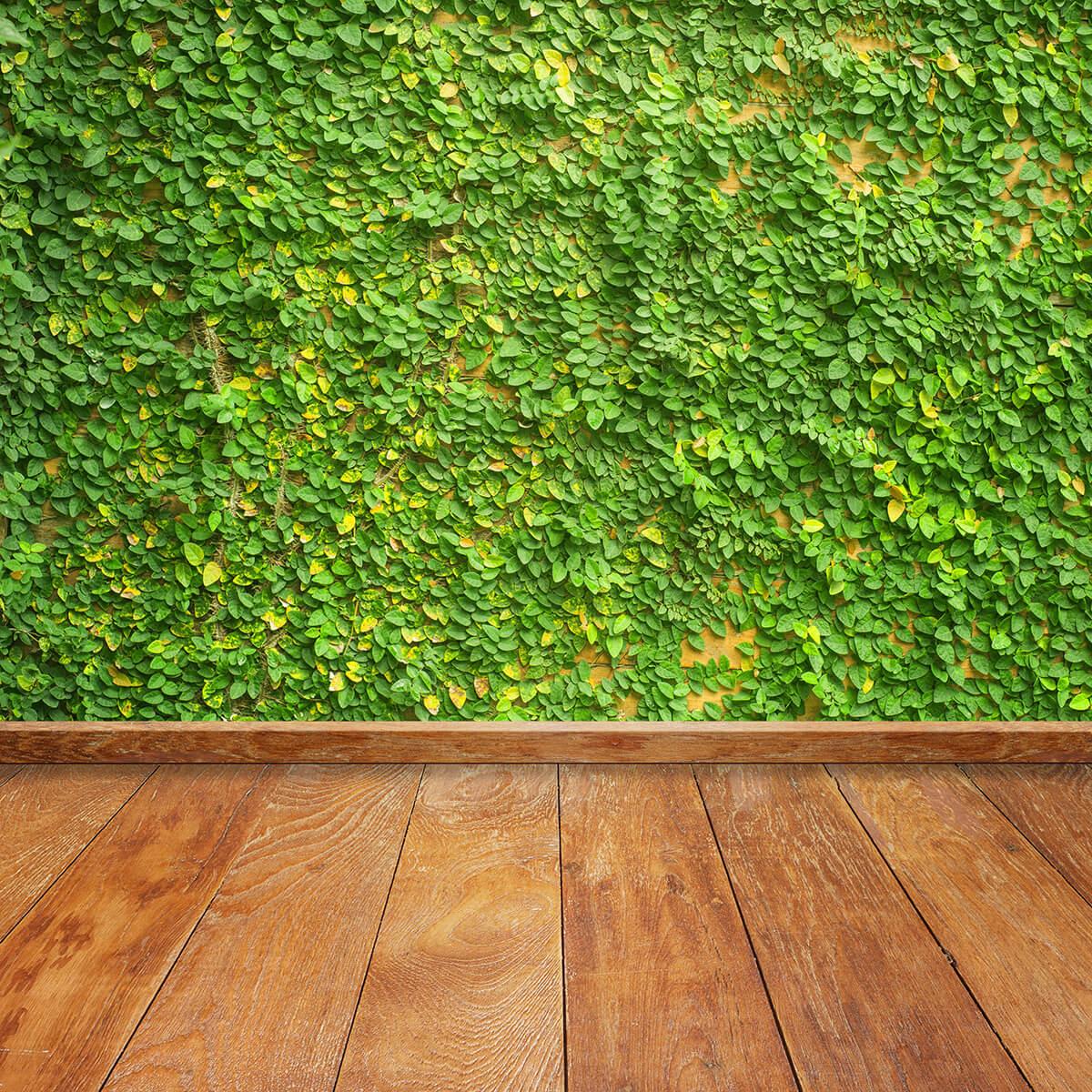 קיר צמחייה מלאכותית