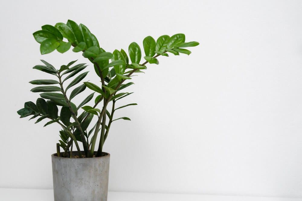 צמח מלאכותי