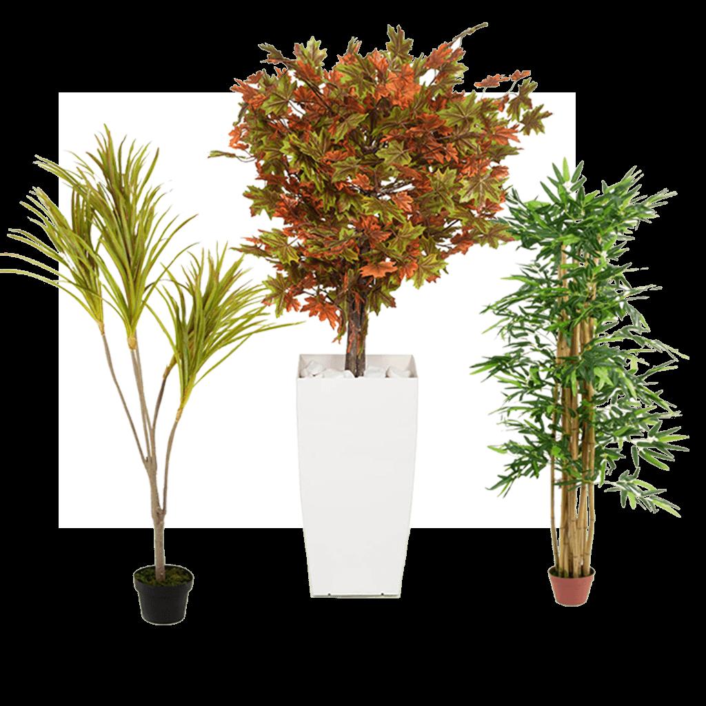 רקע דסקטופ צמחים